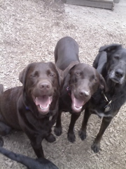 Dog Training Ballard