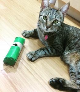 TP roll feeder